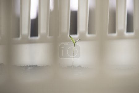 Shortly sprouting potted plant