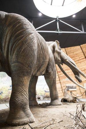 Model of mastodon in real stature
