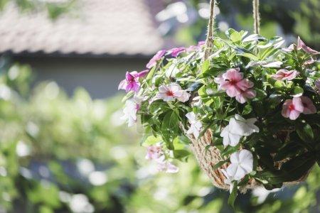 Photo pour Fleurs suspendues pot et lumières du soleil - image libre de droit