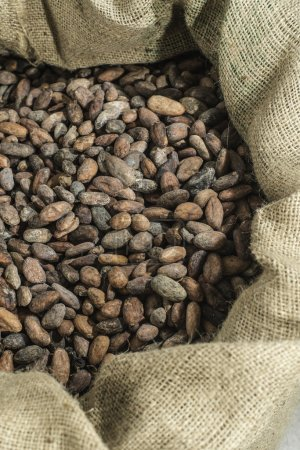 Close up of cocoa beans in a bag...
