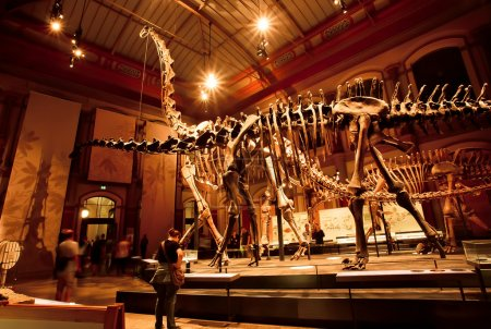 Historical skeletons of Brachiosaurus and Diplodocus in Dinosaur Hall