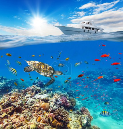 Photo for Underwater view of coral reef with horizon and water surface split by waterline. Anchoring yacht on waves. Summer holiday concept. High Resolution - Royalty Free Image