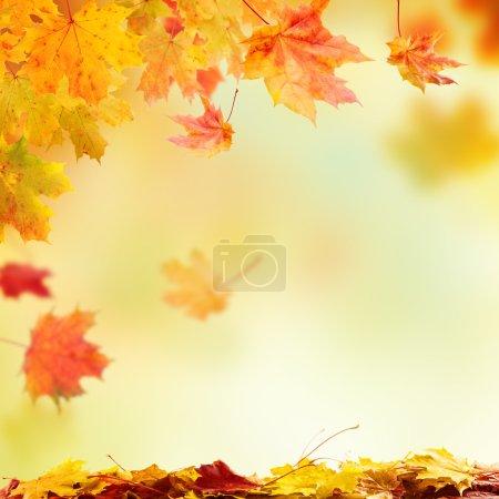 chute des feuilles de l'automne avec un espace libre pour texte