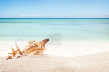 Photo pour Concept de plage d'été avec étoiles de mer, coquillages et papier vide en message . - image libre de droit