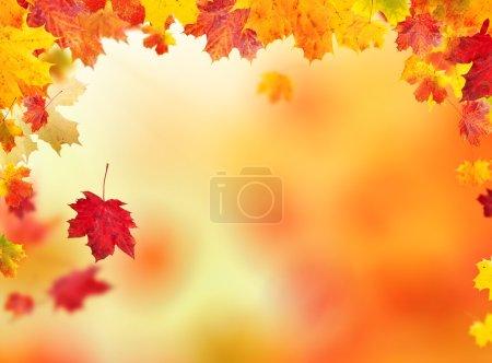 Photo pour Automne feuilles fond avec copyspace pour le texte - image libre de droit