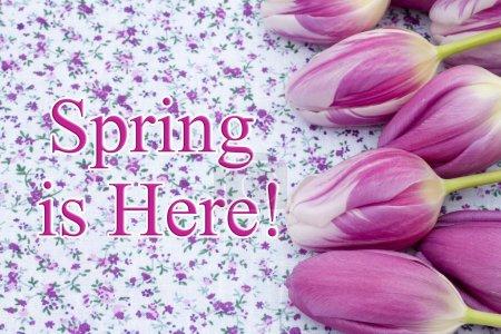 Photo pour Le printemps est ici de voeux, des tulipes sur tissu fleuri violet et texte le printemps est arrivé - image libre de droit