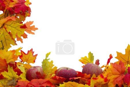 Foto de Otoño hojas y manzanas de fondo, las hojas de otoño y manzanas aisladas sobre fondo blanco con espacio para su mensaje - Imagen libre de derechos