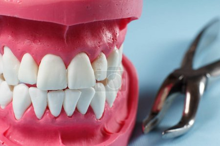 Photo for Layout of the human jaw and a stainless steel dental tongs on the blue background. - Royalty Free Image
