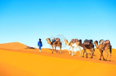 Camel caravan on the Sahara desert