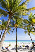 """Постер, картина, фотообои """"пляж с пальмами"""""""