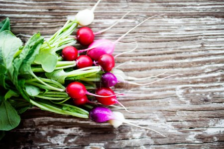 Photo for Bunch of fresh home grown radishes - Royalty Free Image