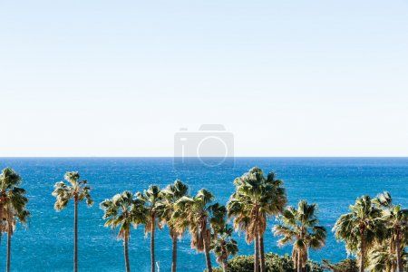 Palm trees view