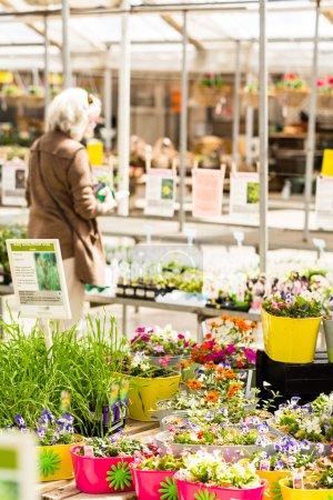 Plants on Spring sale