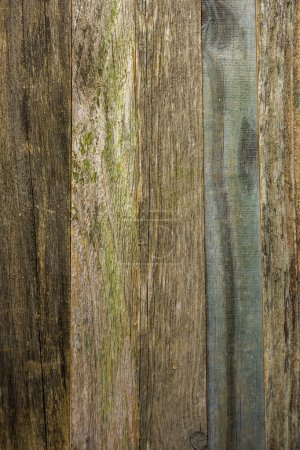 Old barn wood background.