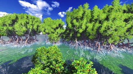 Red mangove shore
