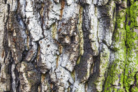 rugged bark of a tree