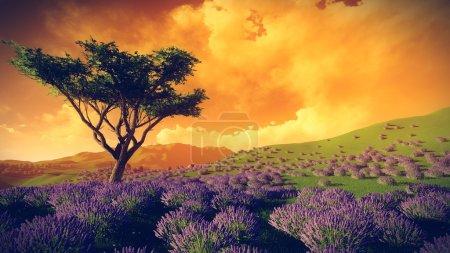 Photo pour Champs de lavande avec un arbre solitaire - image libre de droit