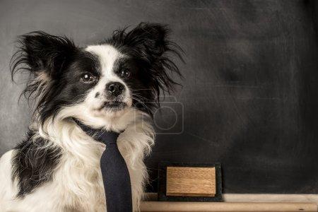Photo pour Chien comme un instituteur avec cravate, tableau noir avec un espace vide pour l'écriture - image libre de droit