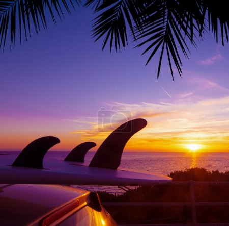 palm and car with surfboard by the shore at sunset