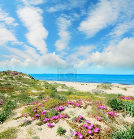 sandy shore with pink flowers