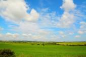 green meadow in sardinia