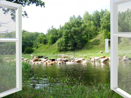 Landscape with the river and watering of cows...