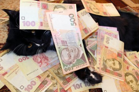 black cat lying and covered with Ukrainian money