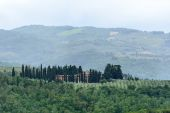 Landscape in Chianti (Florence, Tuscany, Italy) with olive trees and cypresses at summer