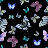 butterfly seamless 05