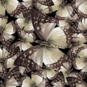 butterfly 03 black
