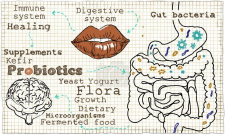 Illustration about the Digestive System and Probiotics