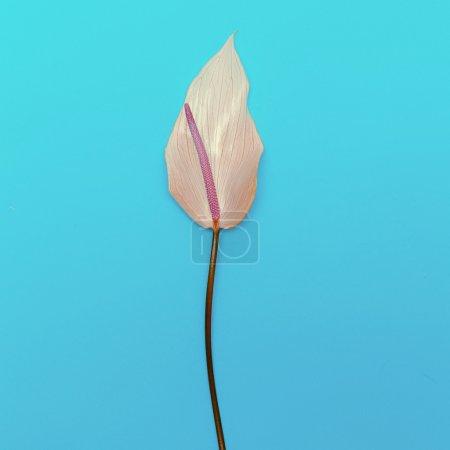 Flower calla. minimal design