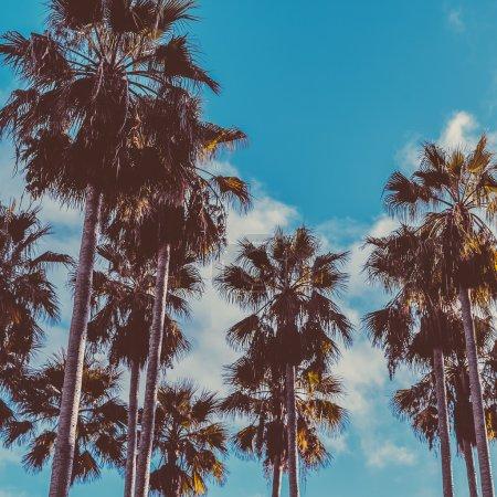 Palm and blue Sky.