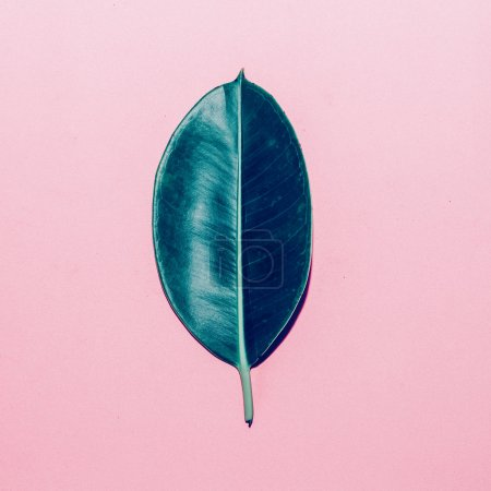 Green leaf on pink background. minimal style