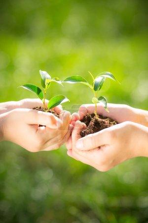 Foto de Niños tiene planta joven en manos sobre fondo verde primavera. Concepto de vacaciones la tierra día ecología - Imagen libre de derechos