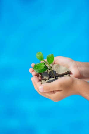 Young plant in hands against