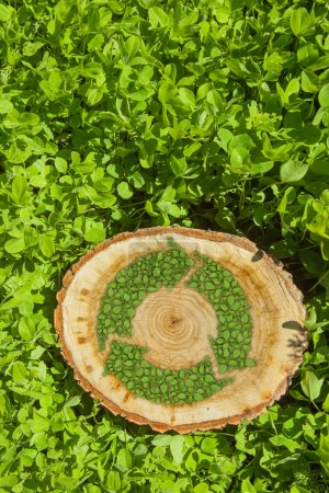 pnia drzewa na trawie z recykling symbol, widok z góry