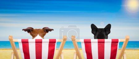 dog beach chair in summer