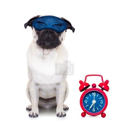 dog sleeping with eye mask