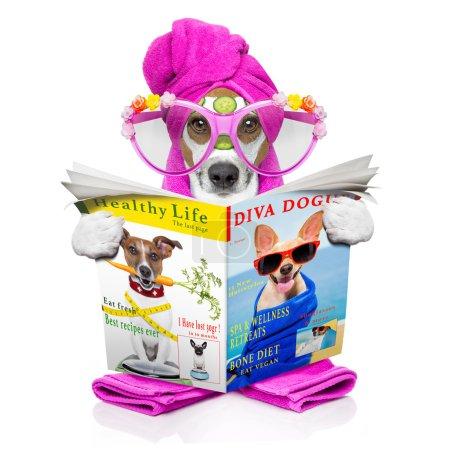 Photo pour Jack russell chien détente avec masque de beauté au centre de bien-être spa, hydratante, masque crème et concombre, isolé sur fond blanc - image libre de droit