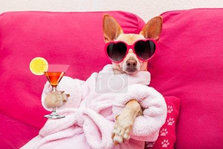 dog spa wellness