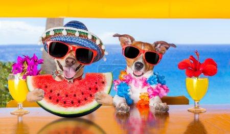 Photo pour Drôle couple de chiens boire un cocktail au bar dans une fête de club de plage avec vue sur l'océan pendant les vacances d'été, manger une pastèque juteuse fraîche - image libre de droit