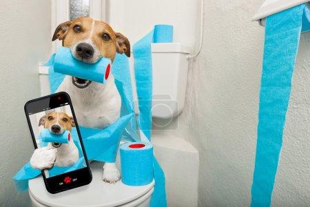 Photo pour Jack Russell Terrier, assis sur un siège de toilette avec des problèmes de digestion ou de constipation prendre un selfie - image libre de droit