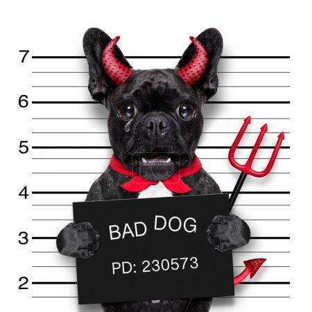 Photo pour Halloween diable pug chien pleurer dans mugshot, pris avec l'appareil photo, dans la prison du poste de police - image libre de droit