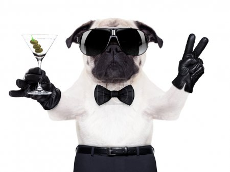 Photo for Cool pug dog with martini glass and peace or victory fingers, - Royalty Free Image