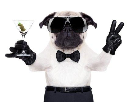 Photo pour Chien carlin cool avec verre de martini et doigts de paix ou de victoire , - image libre de droit