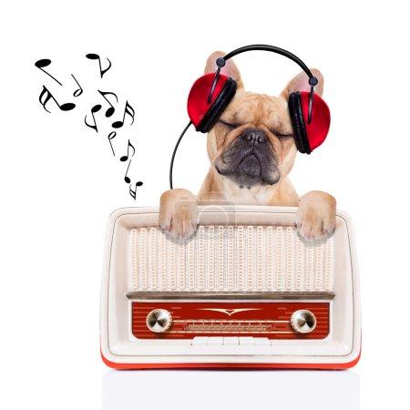 Photo pour Fawn musique chien bulldog, tout en vous relaxant et en appréciant le bruit d'une vieille radio rétro, isolé sur fond blanc - image libre de droit