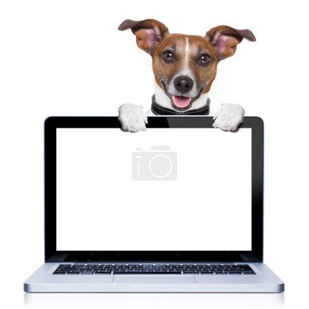 Photo pour Jack russell terrier chien derrière un écran d'ordinateur PC, isolé sur fond blanc - image libre de droit