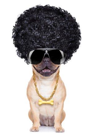 Photo pour Chien afro cool gangster wit chaine dorée et lunettes de soleil, isolés sur fond blanc - image libre de droit