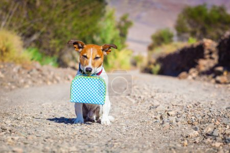Photo for Jack russell dog abandoned and left all alone on the road or street, with luggage bag or suitcase, begging to come home to owners - Royalty Free Image